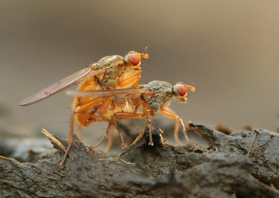Amazing Flies: Nutmeg Wildlife Photography