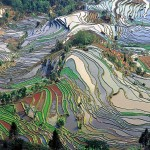 Rice-Terraces of Youanyang County in Yunnan, China