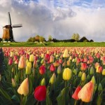 Keukenhof – Garden of Europe
