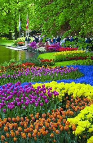 Keukenhof Garden Of Europe Akademi Fantasia Travel