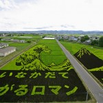 Japanese Rice Field Art