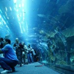 5 Coolest Aquariums In World