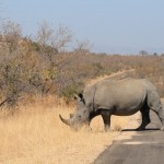 Trip to South Africa: Kruger Park – Useful Information and Tips