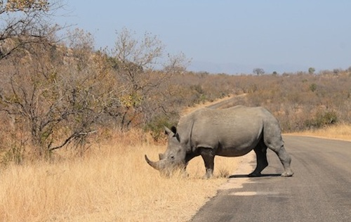 Trip to South Africa: Kruger Park - Useful Information and Tips