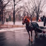 Fun Things To Do In NYC's Central Park During Winter