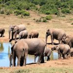 Why You Should Go On A South African Big 5 Holiday